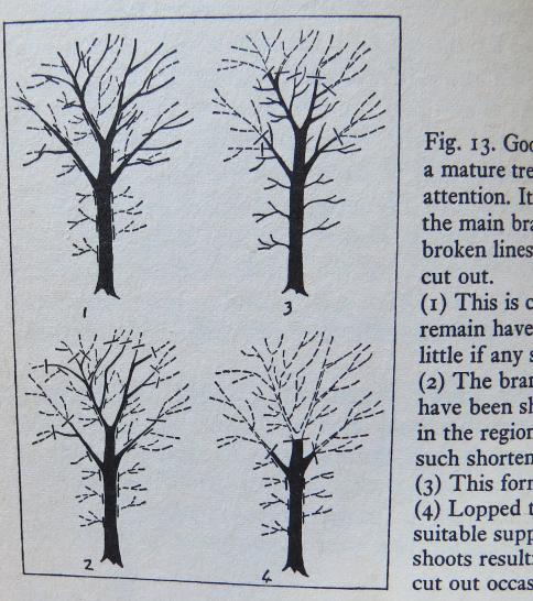 Figure13CrownThinning